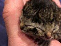 İki yüzü olan kedi doğdu: Beslenirken her iki ağzı da hareket ediyor (VİDEO)