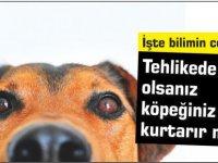 Tehlikede olsanız köpeğiniz sizi kurtarır mı: İşte bilimin cevabı