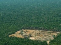 Her 6 saniyede bir futbol sahası kadar orman yok oldu