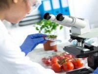 Gıda analizlerinde 5 üründe limit üstü kalıntı, bir üründe tavsiye dışı ilaç tespit edildi
