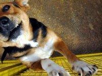 Çin'de Köpek Eti Festivali Tepkilere Rağmen Başladı