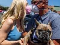 Köpek sahipleri partnerleri ve evcil hayvanları arasında tercihe zorlanırsa ne yapar?
