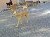 Köpek Saldırısı Sonucu Yaralanan Çocuk Hastaneye Kaldırıldı