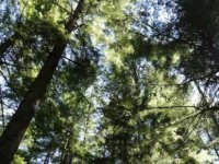 Türkiye'den KKTC ormanları için 5 milyon TL'lik hibe