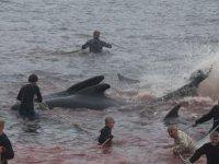 Balina avcısı vahşeti