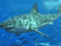 Bacağından ısıran köpek balığına sörf tahtasıyla vurarak ölmekten kurtuldu