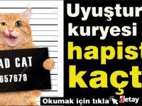 Uyuşturucu kuryesi kedi hapishaneden kaçtı