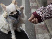 İnsanlar koronayı kedi ve köpeklere bulaştırıyor