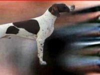 Eski Polis Silahla Av Köpeğini Vurdu