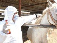 Adıyaman'da Kovid-19'a Karşı Atlardan Elde Edilen Antiserum Üretiminde Sona Gelindi