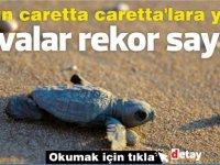 Salgın caretta caretta'lara yaradı:Yuvalar rekor sayıda