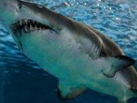 Avustralyalı sörfçü eşini kurtarmak için köpekbalığını yumrukladı
