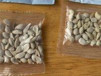 Evlere Çin'den gelen gizemli paketlerin ardından Amazon ABD'de yabancı tohum satışını yasakladı