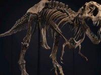 'Sağlığında' 8 ton çeken T-Rex'in iskeleti açık artırmada: Tahmini fiyatı 8 milyon dolar