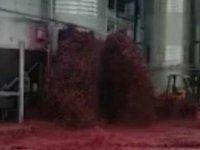 İspanya'daki şaraphanede tank patladı: 50 bin litre kırmızı şarap çevreye yayıldı