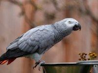 Parka gelen ziyaretçilere küfür eden papağanlar görüşe kapatıldı