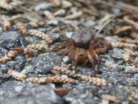 Kıbrıs'a Özgü Yeni Bir Örümcek Türüne Rastlandı
