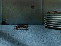 Hamam böceği nasıl yok edilir? İlaç kullanarak hamam böceğinden nasıl kurtulabilirim?