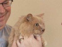 Üç yıl önce kaçan kedi evine döndü