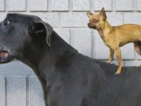 DNA araştırması: İnsanlar önce köpekleri evcilleştirdinda ve sonrasında neler yapılmalı, deprem çantasında neler olmalı?
