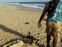 Fildişi Sahili'nde Halk, Etnik Çatışma Korkusuyla Komşu Ülkelere Sığındı