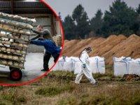 Danimarka'da Kovid-19 Bulaşan Kediler İtlaf Edildi