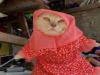 Kedi terzisi: Tesettürden süper kahraman kostümüne geniş bir koleksiyon sunuyor