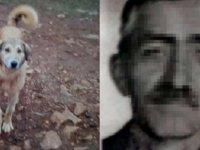 Köpeğini 'fazla ekmek yiyor' diye öldürdü, damadı şikayetçi oldu