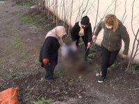 Komşusunun köpeğini sopayla döverek öldürdü: 'Benim bahçeme geçemez'
