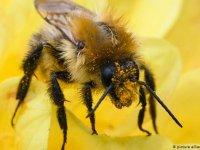 Almanya böcekleri koruma yasası çıkarıyor