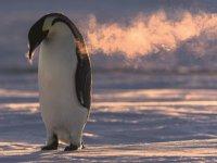 10 bin penguen ile birlikte geçirdiği ayları görüntüledi