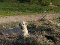 Edirne'de yakılarak öldürülen 8 köpek ile alakalı soruşturma başlatıldı