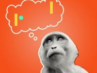 Var mı bu maymunu ping pongda yenecek?