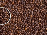 Batı Afrika'da İklim Değişikliğinden Etkilenmeyecek Eski Bir Kahve Türü Bulundu
