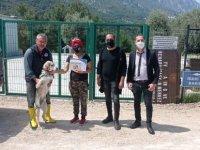 Girne Belediyesi Sokak Hayvanlarıyla İlgili Çalışmalarına Devam Ediyor