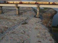 Covid-19'un ikinci dalgasının ağır vurduğu Hindistan'da bir günde 4 bin 77 kişi hayatını kaybetti