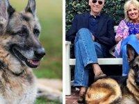 """Biden Çiftinin Köpeği Champ, 13 Yaşında Hayatını Kaybetti; """"Tatlı Oğlumuzu Özleyeceğiz"""""""