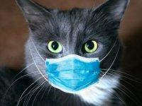 Rusya'da Hayvanlar İçin Koronavirüs Antikor Testi Geliştirildi