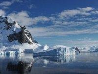 Bilim İnsanları, Antarktika'da Yeni Bir Bitki Türü Keşfetti