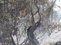Karşıyaka'daki yangın büyük oranda kontrol altına alındı