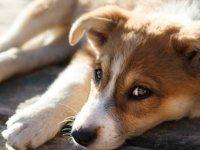 LAÜ'den Güzelyurt Hayvanları Koruma Derneği'ne Bağış