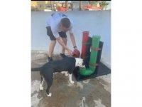 CTP Yeniboğaziçi Örgütü, Sokak Hayvanları İçin Çeşitli Noktalara Mama ve Su Kabı Yerleştirdi