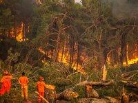 Türkiye, 8 gündür orman yangınları ile mücadele ediyor: 5 ilde, 14 yangın sürüyor