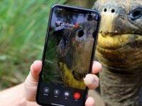 Nesli tükenmekte olan iki kaplumbağa FaceTime'da ilk buluşmasına çıktı