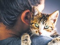 Evde kedi besleyen her dört kişiden birinde kedi alerjisi var