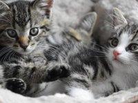 Bilim insanları, kedilerin karakterlerindeki 7 ortak özelliği belirledi