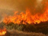 Baf Bölgesinde Yangın Etkili Oldu