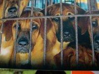 Köpekten özür davasında 2 yıl hapis cezası!