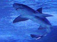 Avustralya'da köpek balığı saldırısı: Bir yaralı
