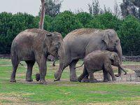 Hindistan'da tren fil sürüsüne çarptı